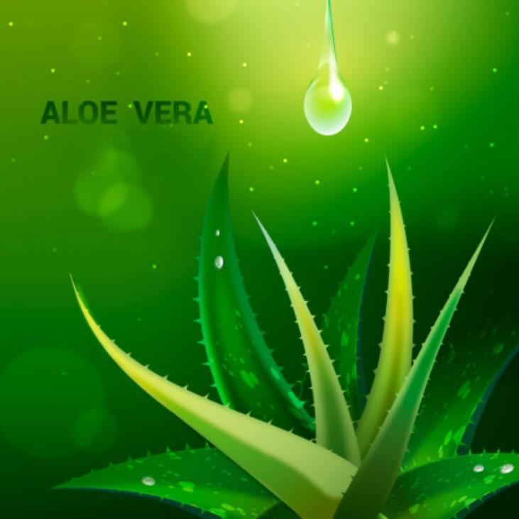 Miracle Gel Ingredient - Aloe Vera